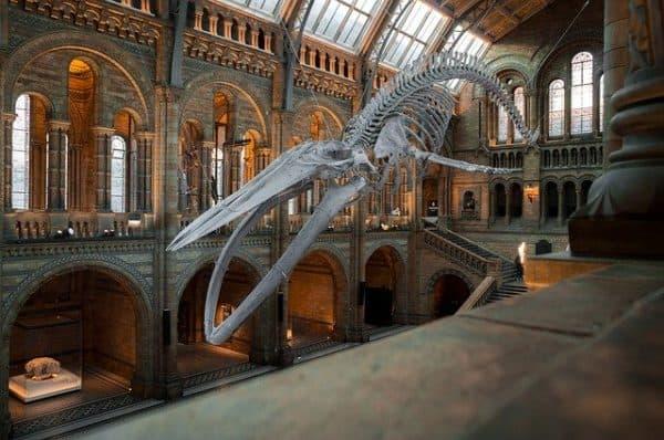 App per Muoversi a Londra per musei